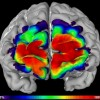 New areas of brain linked to Social Learning and Working Memory
